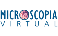 logo Microscopia Virtual
